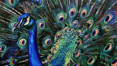 peacock painting vastu