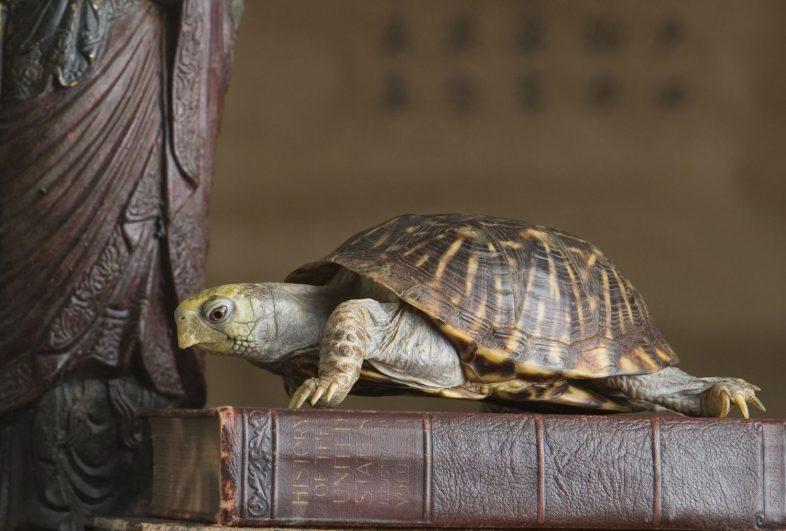 Rosanne-Olson-g-turtle-56a2e2315f9b58b7d0cf8064