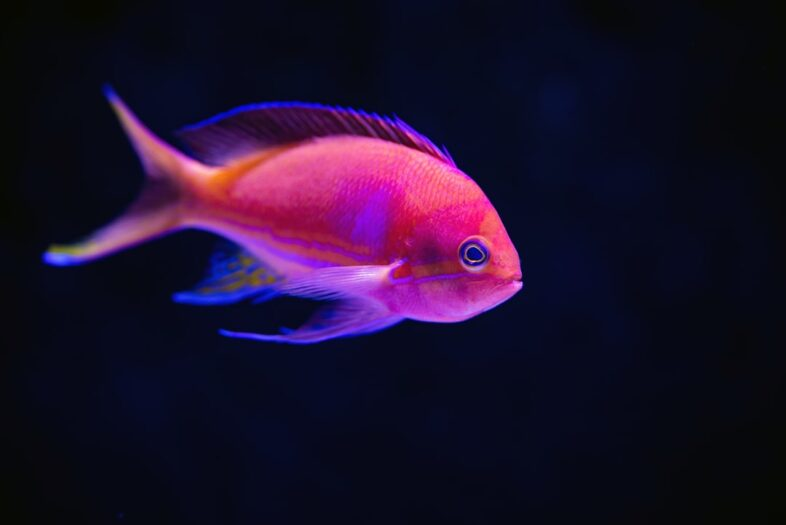 सपने में मछली देखना